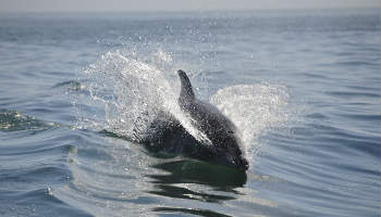 You may spot a dolphin at Berry Head National Nature Reserve